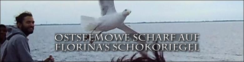Banner_Ostseemoewe-scharf-auf-Schokoriegel